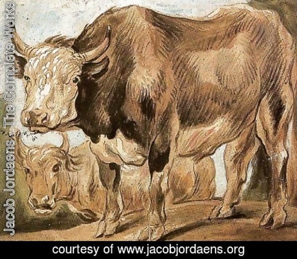 Jacob Jordaens - Two Standing Oxes, Facing Left